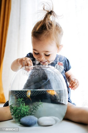 109350576 istock photo Cute child is feeding his goldfish 1186990422