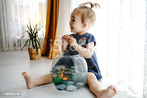 109350576 istock photo Cute child is feeding his goldfish 1186993784