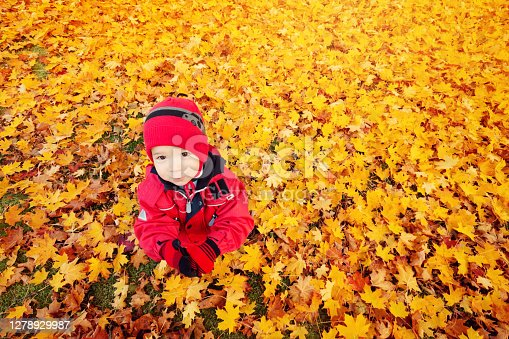Cute child sitting on the lawn covered with yellow leaves. Boy having fun outdoors in autumn.