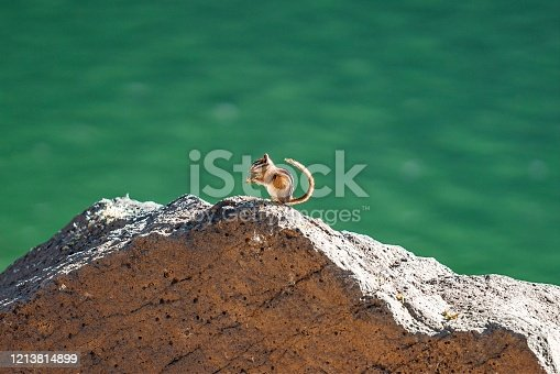 Cute Chipmunk Eating On a Rock at Grand Mesa Lakes In Beautiful Western Colorado