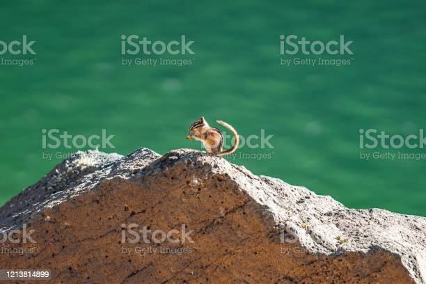 Photo of Cute Chipmunk Eating On a Rock at Grand Mesa Lakes In Beautiful Western Colorado