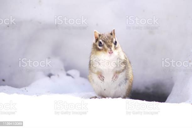 Photo of Cute chipmunk
