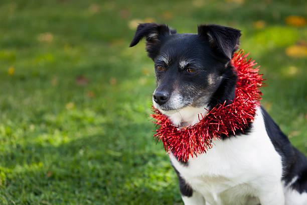 Süße Weihnachten Hund – Foto