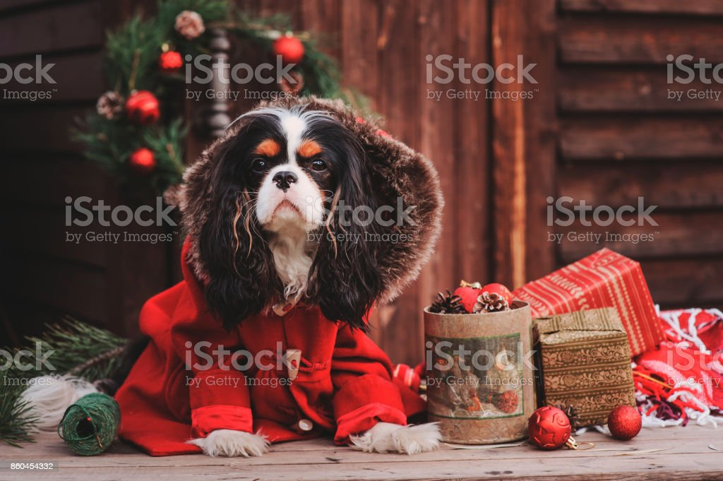 Imagine This Wood Sign for Cavalier King Charles Dog Breeds