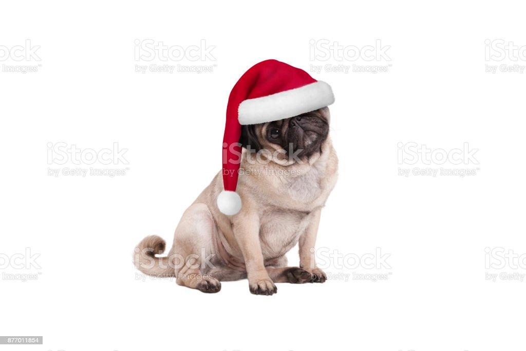 leuke kerst pug puppy hond met kerstmuts, zitten foto
