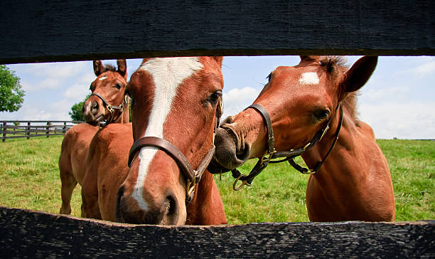 Cute Colt Horses