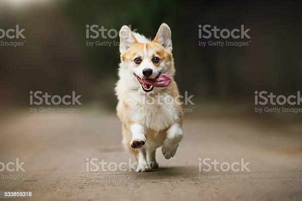 Cute corgi dog picture id533859316?b=1&k=6&m=533859316&s=612x612&h=hfafaryvj3zhajrgi cwz7aptvz focppf1lh3kpwrc=