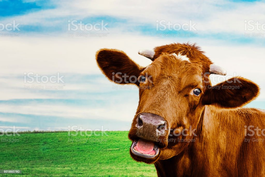 Cute cow at the meadow. Selective focus stock photo
