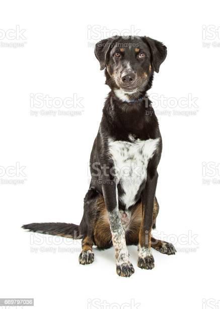 Cute crossbreed black and tan hound dog picture id669797036?b=1&k=6&m=669797036&s=612x612&h=euf5m0p0mnjdb3sip6chhid3vxutab8k3roxjxf1n64=