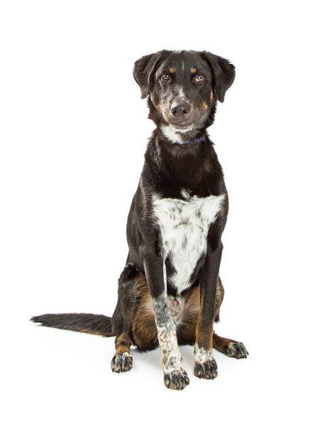 Cute crossbreed black and tan hound dog picture id669797036?b=1&k=6&m=669797036&s=612x612&w=0&h=rr6l5z9ao8uwcs ovxijyx8bnjjfbt9e17a0jipqomq=