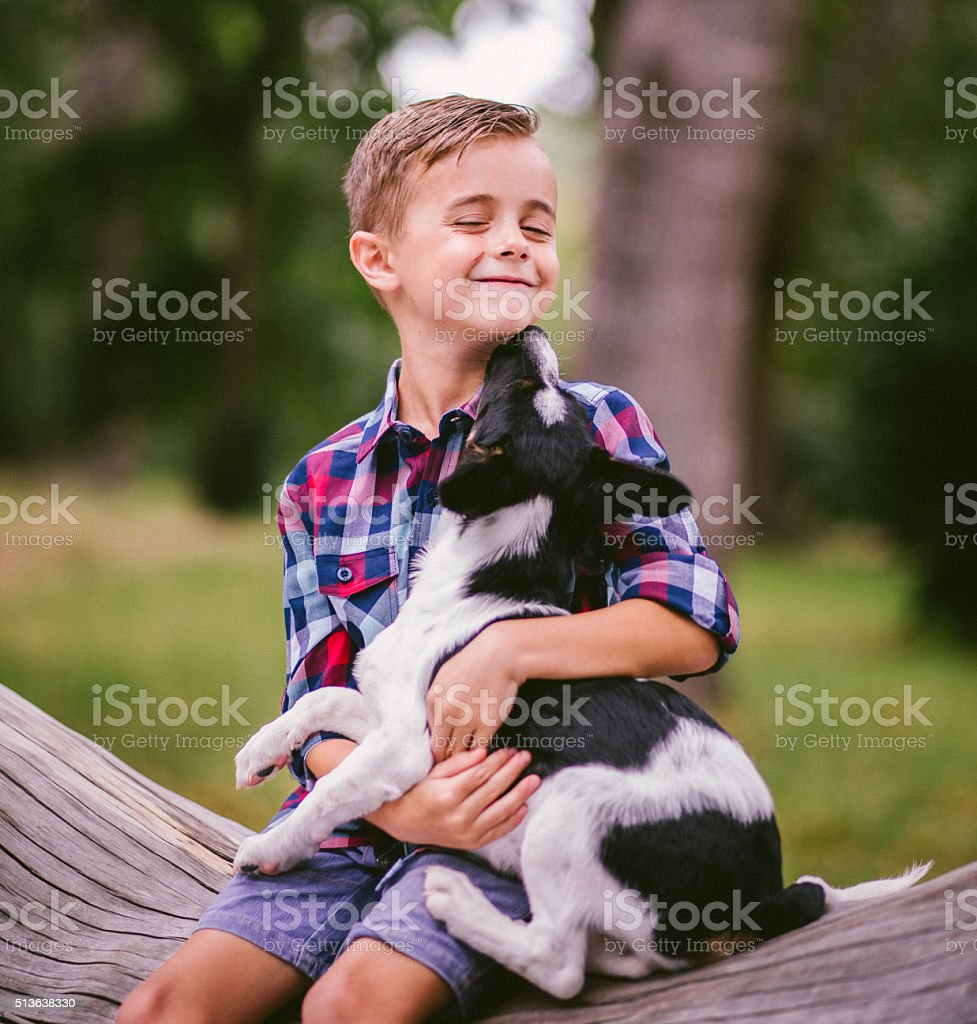 Cute crossbreed puppy dog licking boys face sitting on tree stock photo