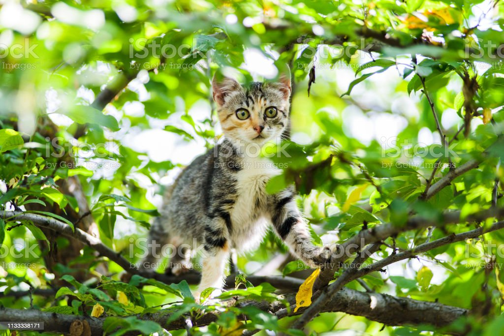 Cute Curious Kitten Cat Climbing Tree Ready To Jump Stock Photo Download Image Now Istock