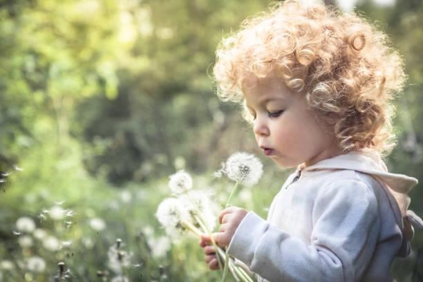 söta lockigt barn flicka ser som maskros blåser maskros i sommaren park i solig dag med solljus - summer smell bildbanksfoton och bilder