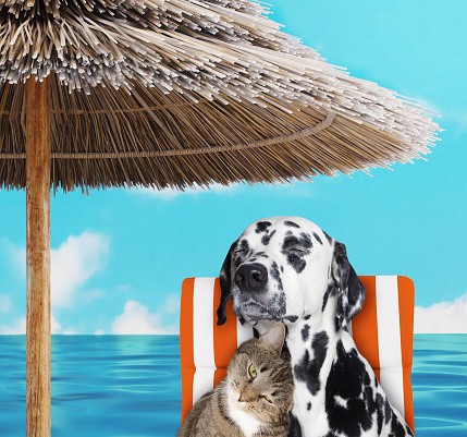 Cute dalmatian dog and cat resting and relaxing on the beach chair under umbrella