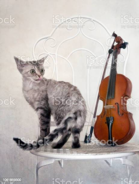 Cute devon rex cat and violin with bow on white vintage chair closeup picture id1061859300?b=1&k=6&m=1061859300&s=612x612&h=dgjtkfjw2fbzndpojsqxhgz9mhvpgnjmebkslx9k9zu=