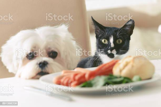 Cute dog and cat asking for food picture id891368208?b=1&k=6&m=891368208&s=612x612&h=b6wvsftcdecsmi4azuwcgqstsfrbyqzrpjsrdtunvli=