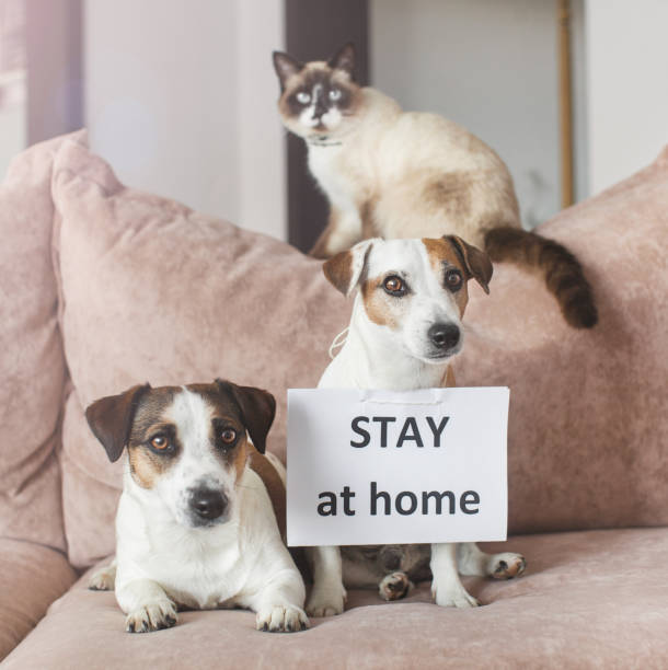 Cute dog and cat at home with blank card stock photo