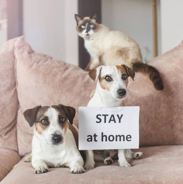 Netter Hund und Katze zu Hause mit leeren Karte – Foto