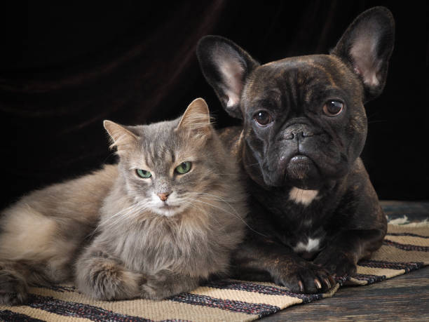 Cute dog and cat lie together on the floor friendship pets the dark picture id682517906?b=1&k=6&m=682517906&s=612x612&w=0&h=6qctwb2smur3rlqs1e2i ssthai1yurjqojbqslugzw=