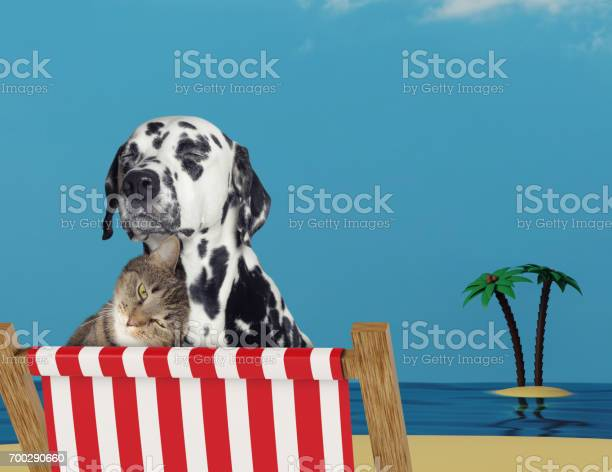 Cute dog and cat relaxing on a red deck chair on the beach picture id700290660?b=1&k=6&m=700290660&s=612x612&h=98rin452ynepr2uwwrjjj1ikirfjeu21bh2uvfy a6i=