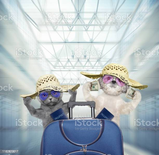 Cute dog and cat wait at the airport with blue suitcase picture id1152820017?b=1&k=6&m=1152820017&s=612x612&h=3cyrbgdobupztexkmp3o qk83ija1qh11cuxl21u hw=