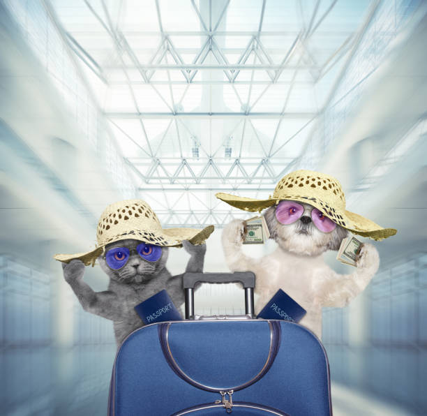 Cute dog and cat wait at the airport with blue suitcase stock photo