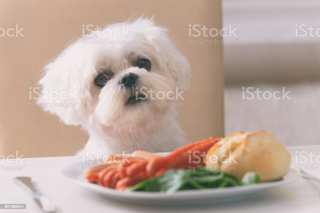 Cute dog asking for food stock photo
