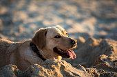 Cute female dog at the beach