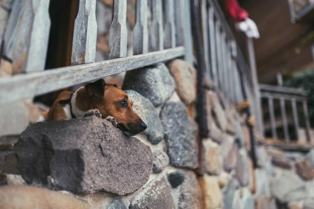 niedlichen hund bei der treppe nach unten - hund unter treppe stock-fotos und bilder