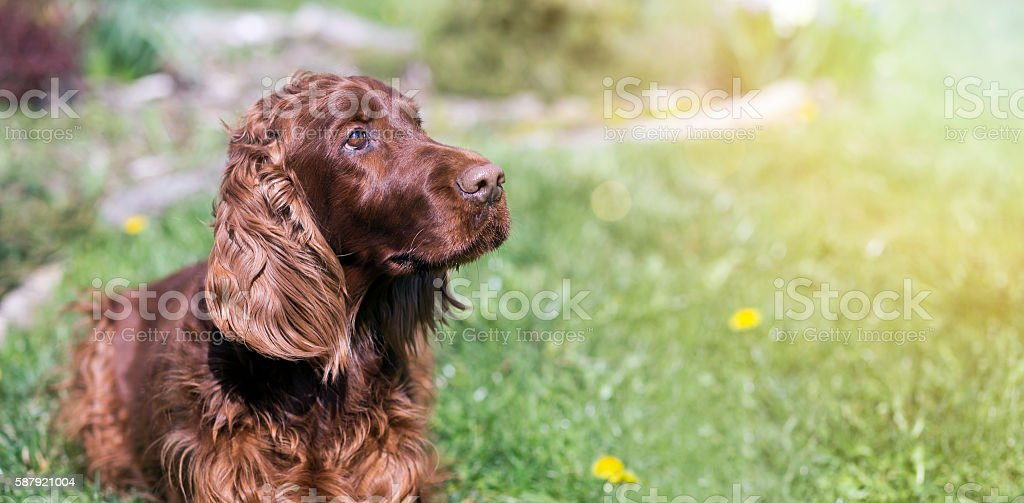 Cute dog banner stock photo