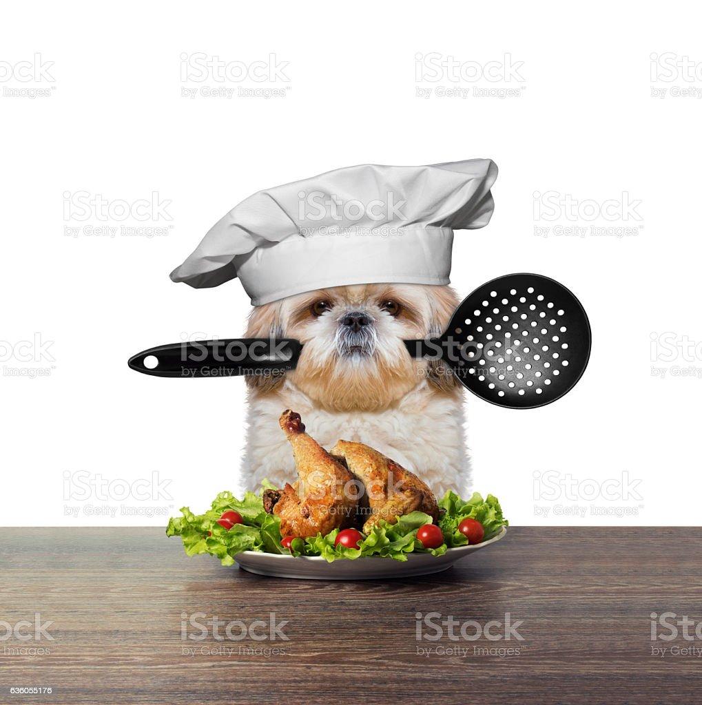 Cute dog chef is preparing chicken - Photo