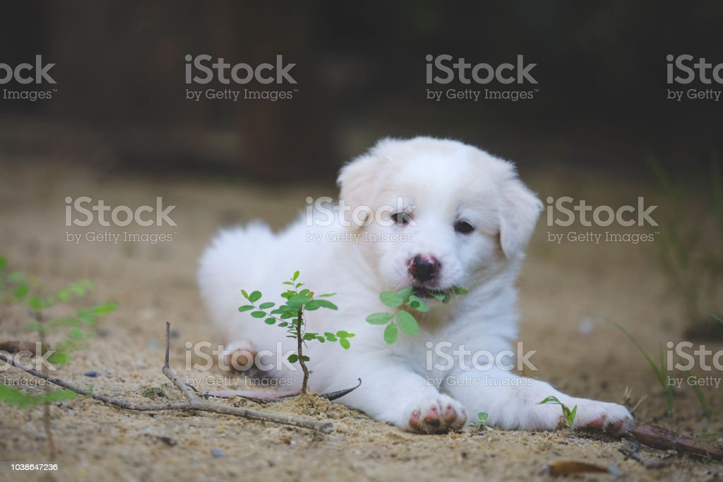 Cute Dog Dogs Eat Leaves Puppies Sleep Well Stock Photo Download Image Now Istock
