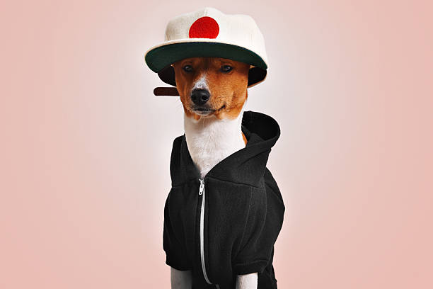 Cute dog dressed in hoodie and trucker hat stock photo