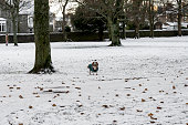 A cute dog dressed in warm clothes and standing on snow covered ground in Victoria park, Aberdeen, Scotland. Photo taken in the morning after unusual snowfall in December 2017.