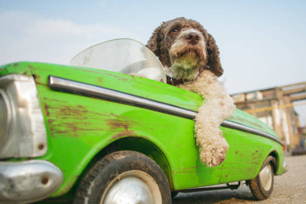perro lindo conduciendo pequeño coche retro - foto de stock