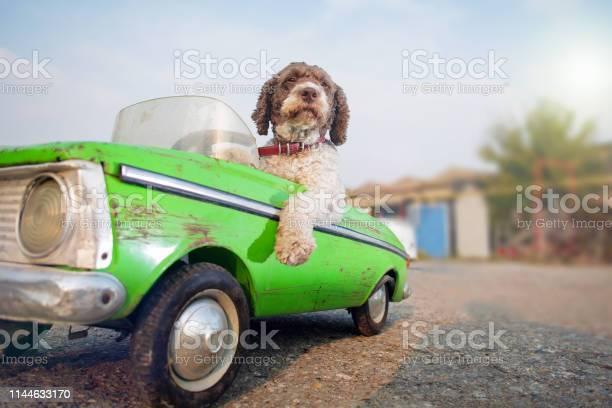 Cute dog driving small retro car picture id1144633170?b=1&k=6&m=1144633170&s=612x612&h=lw9xcudhl8y4z tzapwflpcbqffkwy6qpuil6bhtqww=