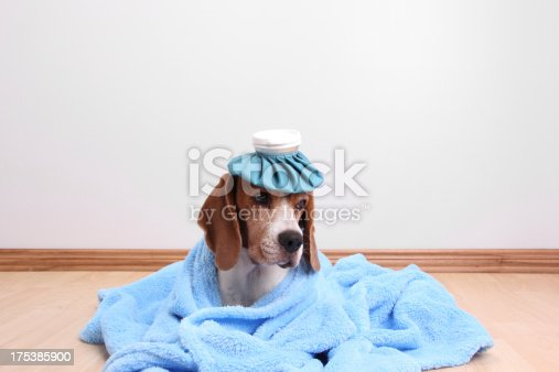 Cute Dog Feeling Sick Stock Photo & More Pictures of Animal