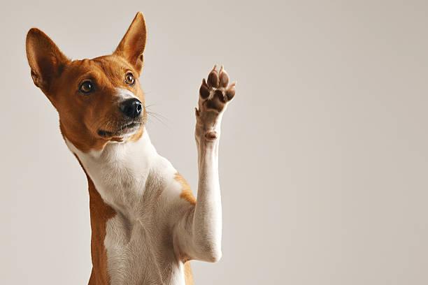 Cute dog giving his paw - foto de stock
