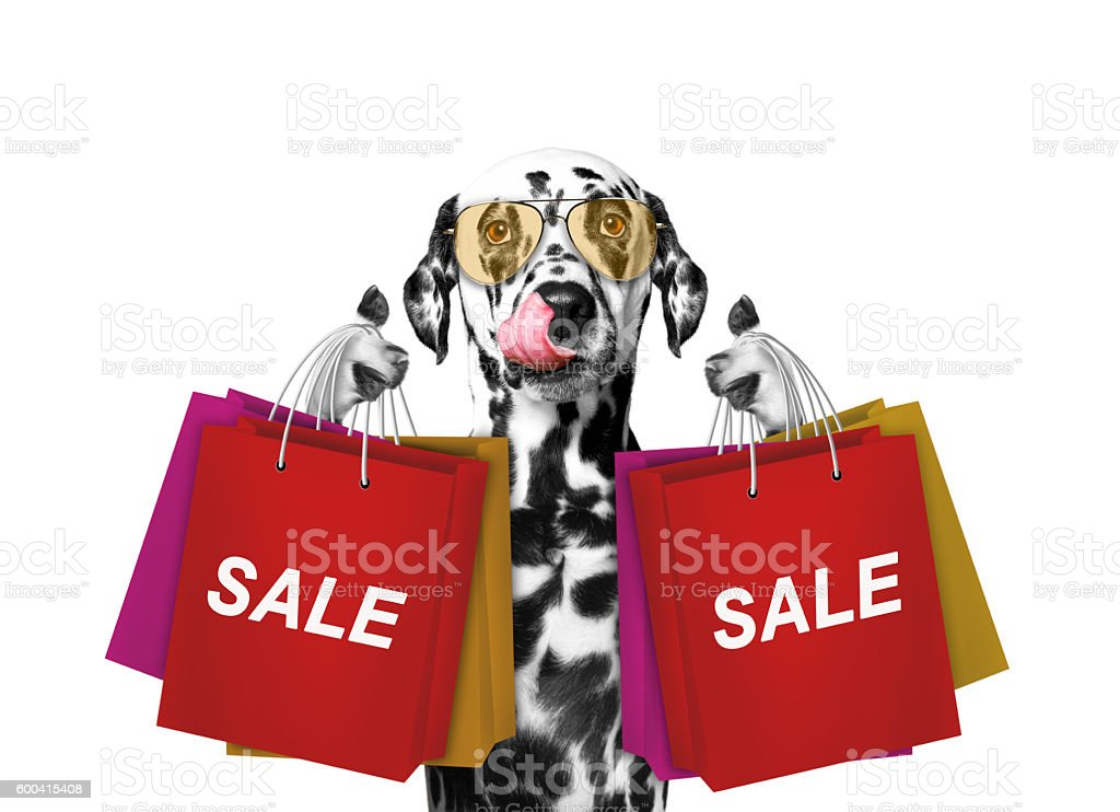 Cute dog goes shopping and sales stock photo