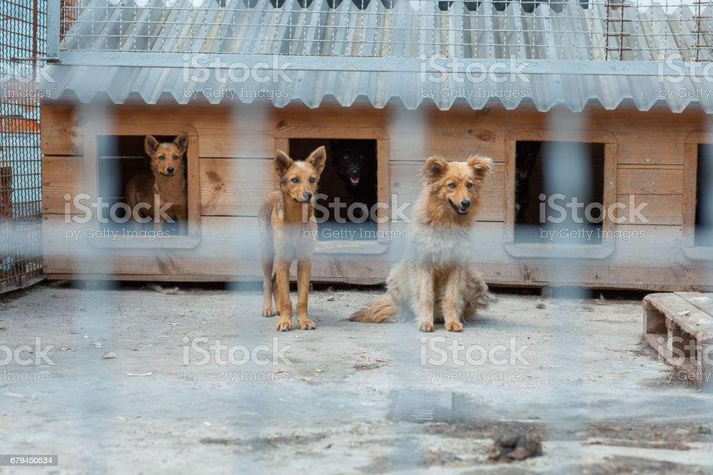 Cute dog in a cage royalty-free stock photo