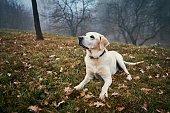 istock Cute dog in autumn nature 1186958514