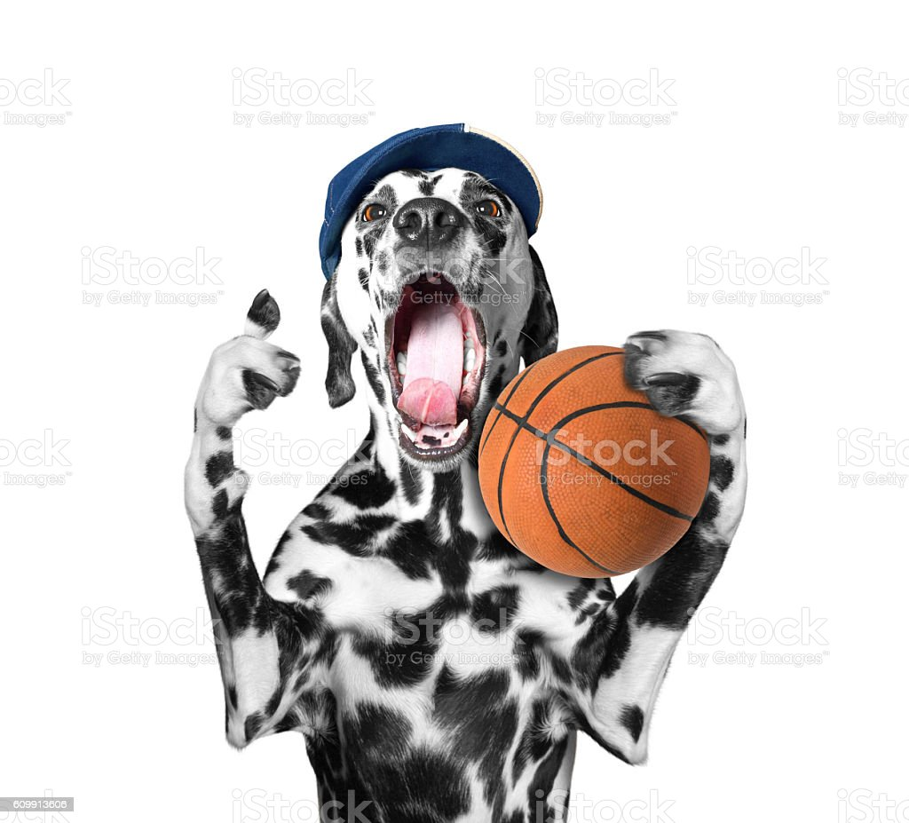 Cute dog in cap holding a ball and shout and stock photo