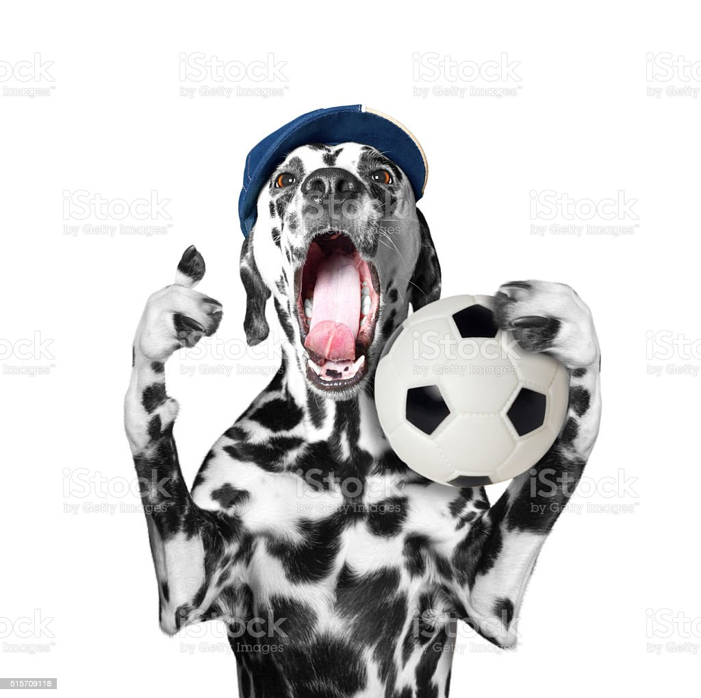 Cute dog in cap holding a soccer ball and scream stock photo
