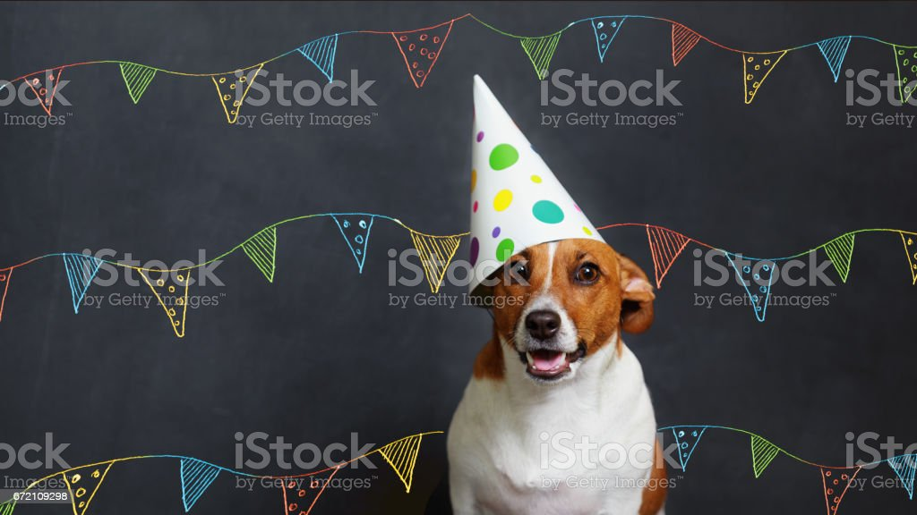 Cute dog in carnival party hat stock photo