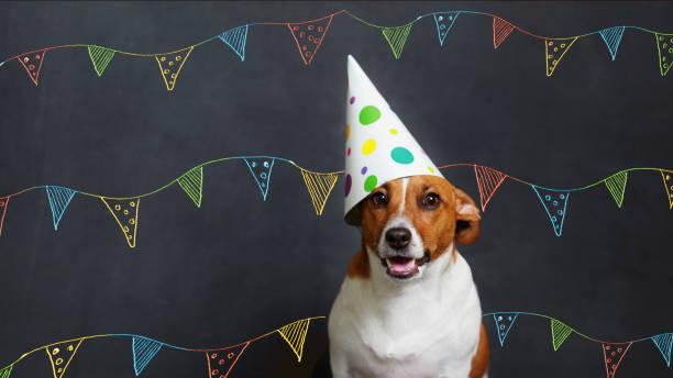 Niedlicher Hund in Karnevalsfeier Hut – Foto