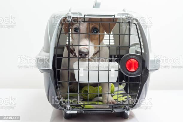 Cute dog in carrier picture id938450022?b=1&k=6&m=938450022&s=612x612&h=yywieph0o2rawafq rwqtxcyytbydfhygieyjzg6dbo=