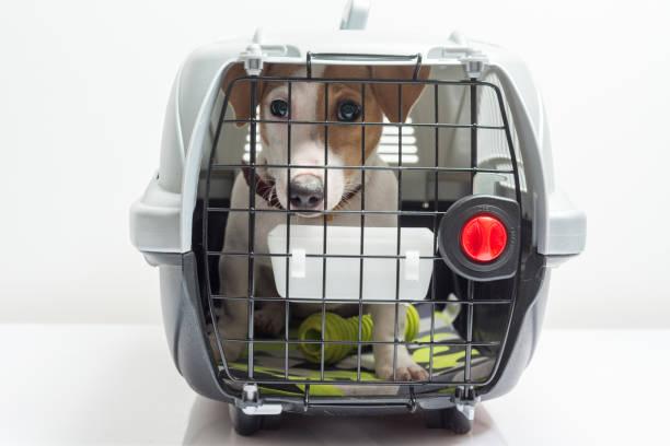 niedlich hund im käfig - hunde träger stock-fotos und bilder