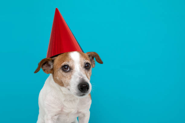 Cute dog in red party hat Designed stock photo