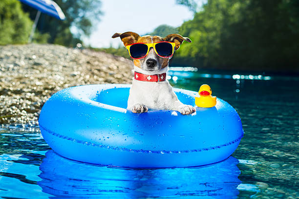 cute-dog-in-water-tube-with-sunglasses-o