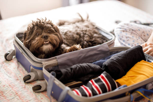 Cute dog inside of open suitcase stock photo